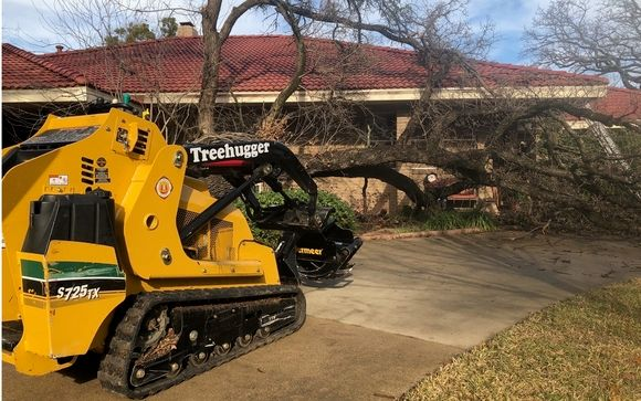 tree removal arlington tx